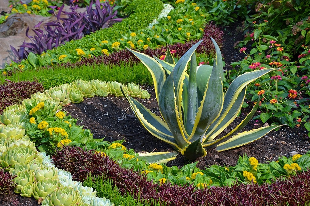 Living Under Water Restrictions? Transform Your Garden With These Succulent Plants